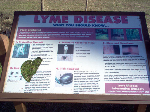 Lyme Disease Recovery