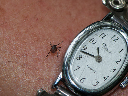 What Is Lyme Disease Symptoms In Humans