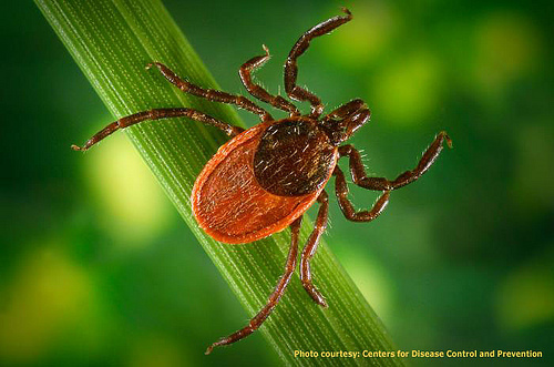 Chronic Lyme Disease Testing
