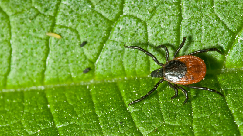 Antibiotics Lyme Disease