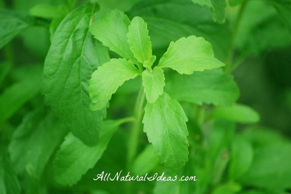 Natural Treatment For Lyme Disease