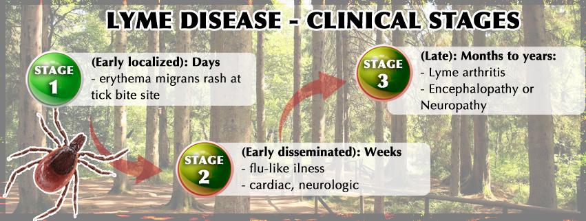 Best Antibiotic For Lyme Disease