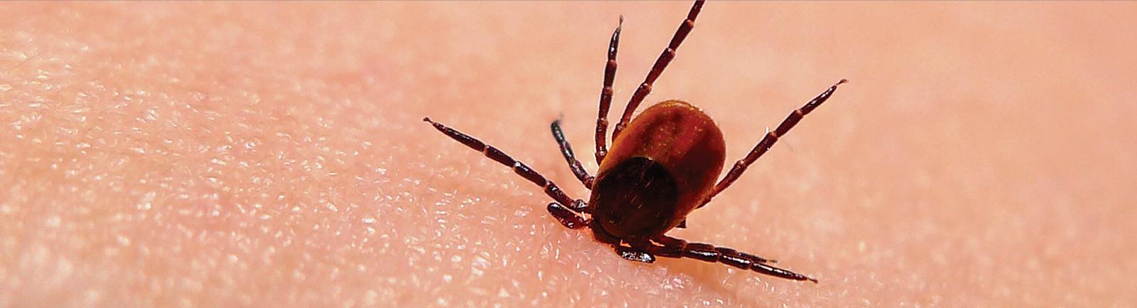 Cure Lyme Disease
