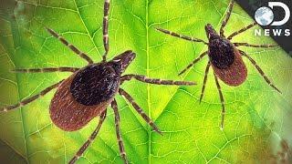 Lyme Disease Kenosha Wisconsin