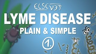 Lyme Disease Symptoms Cambridge Massachusetts